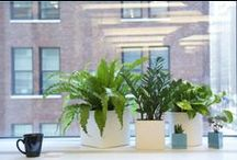 Office Plants / Plants and Pots for Acuform Office Stations