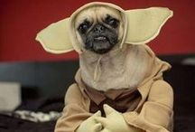 Pooch Geekery / All of the great costumes, quotes and poses from our favorite geeky movies, books, tv shows, comic books, mini series....and so on...but with DOGS!