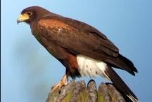 Phone Skope Birding / Phone Skope Birding