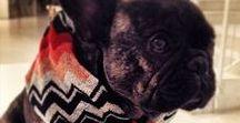 MissoniHome loves pets