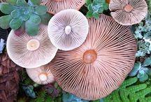 Fungi natural references