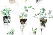 Plantes /   / by Electre Lone