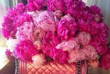 Pinky..rose