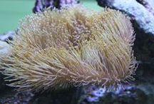 BLOG Aquarium West / Spannende Themen rund um die Aquaristik
