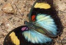 Butterflies / Bazen bir kelebeğin kanat çırpışı dünyanın öbür ucundan duyulur...