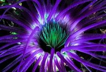 Coral and Anemones / Beautiful pictures of various species found on the internet and Pinterest!