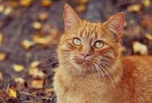Katten / Katachtigen