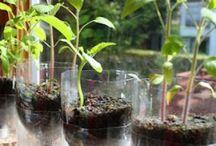 Gardening - البستنة
