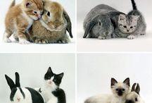 Animalplanet / Love for the cats & bunns..❤️