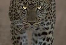 Animals, wild and free
