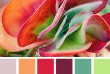 Palettes de couleurs...