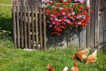 Hühner im Kindergarten