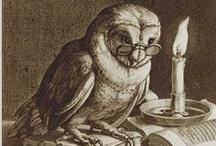 Owls / by Madelin Mada