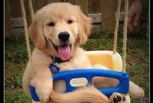 Pup Pups