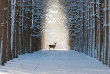 / winter wonderland