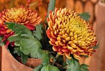 Rusty Autumn / by Southern Blooms/ Pat's Floral Designs