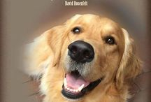Golden Retrievers / For the love of my Goldies .... Pure passion they give us as a family