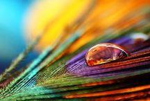 Alle kleuren! / Omdat kleur de wereld zo mooi maakt...