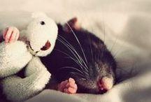 Schattige dieren / Wie goed is voor dieren, is ook goed voor mensen.