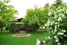 Gardening / Garden & Flower