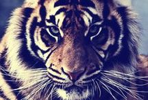 Wild Kingdom / Exotic Animals, Strange Beasts, Creatures, Outdoor Wildlife, Baby Animals,  Wild Nature, Exotic and weird animals. Awww. Strange. Gods Creations