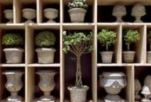 Containers, Planters & Pots