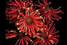 Botanical - Fine Art