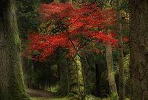 Arboles y Bosques / Naturaleza