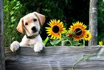 ANIMALS ❇ DOGS & FLOWERS / by Victorian Era