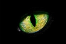 Green, Yellow, Black / The inspiration board