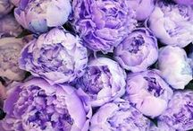 Textures / From petals to steam to pleats - we find inspiration in the textures around us.