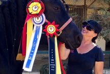 Enchantress FPZV national champion 2014 / Friesian horse