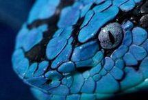 serpientes / Las serpientes