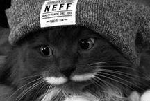 fur baby kitties