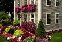 Landscaping / Beautiful Border Flowers