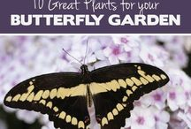 Gardening Tips & Ideas / It's Beautiful Out There!!