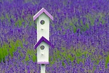 Bird houses art