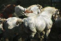 Heavy Horses Cold Blood Workers / by Lee Eezeerider