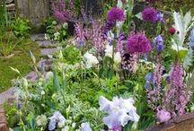 Virágzó kertek - Blooming Gardens
