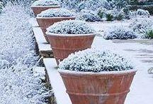Tél a kertben - Winter in the Garden