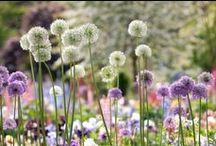 Virágágyások - Flowerbeds