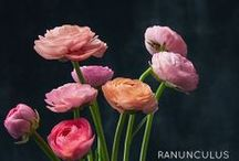 floral board: ranunculus  / by The Perfect Petal