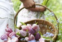 Tavasz a kertben - Spring in the Garden