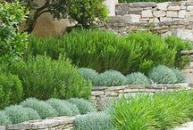 Örökzöldek - Evergreens