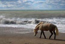 Horses / nur Pferde Bilder