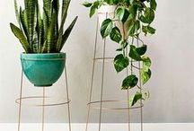 Household Plants / Indoor plants to improve health and aesthetics of your home.