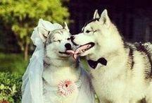 lesbain wedding