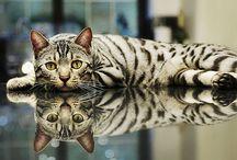 Cats#