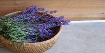 Lavendel  zu Hause / Lavendelrezepte, Lavendelpflanzen zu Hause, Lavendel im Garten, Lavendel für die Hautpflege und Gesundheit