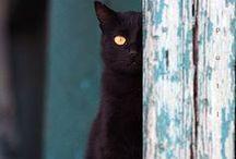 Meow - Photos/Jeux/Idées